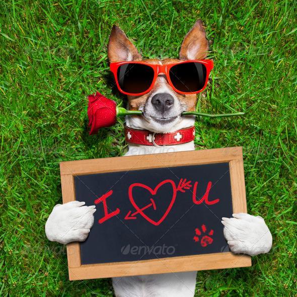 valentines dog - Stock Photo - Images