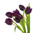 Bouquet of tulips - PhotoDune Item for Sale
