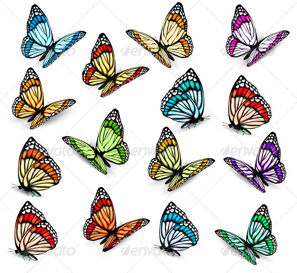 GraphicRiver Set of Realistic Butterflies 8105148