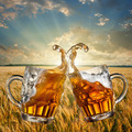 Splash of beer against wheat and sunset - PhotoDune Item for Sale