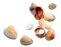 Seashells isolated on white background - PhotoDune Item for Sale