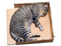 cat sleeping in a cardboard box - PhotoDune Item for Sale