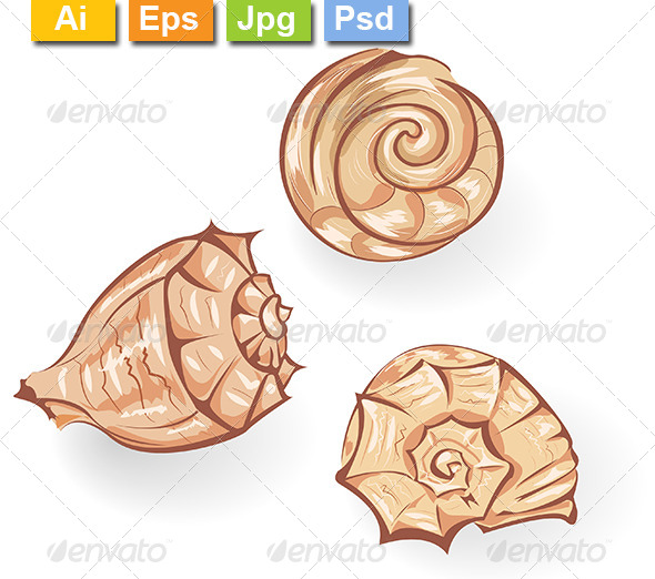 GraphicRiver Seashells 8107589