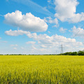 wheat field, blue sky and power lines - PhotoDune Item for Sale