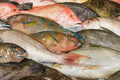 Various fresh fish at a fish market - PhotoDune Item for Sale