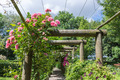 Ornamental garden with pergola and rosa - PhotoDune Item for Sale