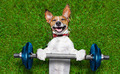 fitness dog - PhotoDune Item for Sale