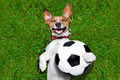 funny soccer dog - PhotoDune Item for Sale