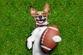 american football dog - PhotoDune Item for Sale