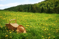 Picnic basket in the grass - PhotoDune Item for Sale