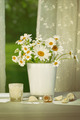 Summer daisies in front of window - PhotoDune Item for Sale