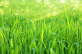 green grass and light. - PhotoDune Item for Sale