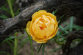 portulaca flower in the garden - PhotoDune Item for Sale