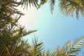 Palm tree leaves naturally framing the sky - PhotoDune Item for Sale