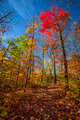 Hiking trail in fall forest - PhotoDune Item for Sale