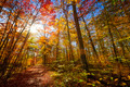 Sunshine in fall forest - PhotoDune Item for Sale
