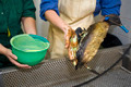 Cleaning an oil bird - PhotoDune Item for Sale