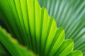 Palm trees leaves - PhotoDune Item for Sale