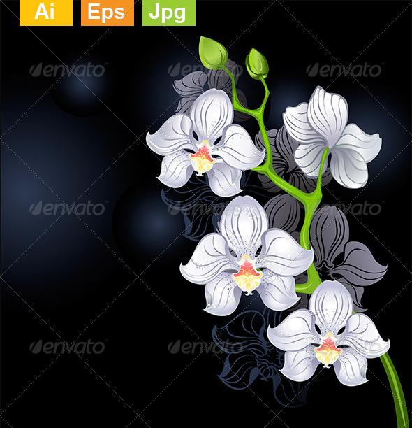 GraphicRiver White Orchids 8131203