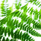 fern leaves on blue sky - PhotoDune Item for Sale