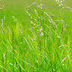 bright green grass - PhotoDune Item for Sale