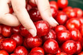 Fresh delicious cherry in woman hand, closeup - PhotoDune Item for Sale