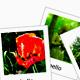 Dynamic dragdrop image gallery - ActiveDen Item for Sale