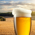 Glass of beer against wheat field - PhotoDune Item for Sale
