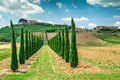 Vineyards and farm road in Italy - PhotoDune Item for Sale