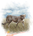 Watercolor Image Of Cheetah - PhotoDune Item for Sale