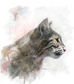 Watercolor Image Of  Bobcat - PhotoDune Item for Sale