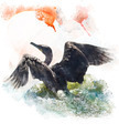 Watercolor Image Of  Double-crested Cormorant - PhotoDune Item for Sale