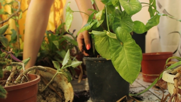 Put Soil In Pot