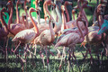 group of flamingoes with long necks and beautiful plumage - PhotoDune Item for Sale
