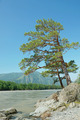 Beautiful summer landscape with pine tree on the river bank - PhotoDune Item for Sale