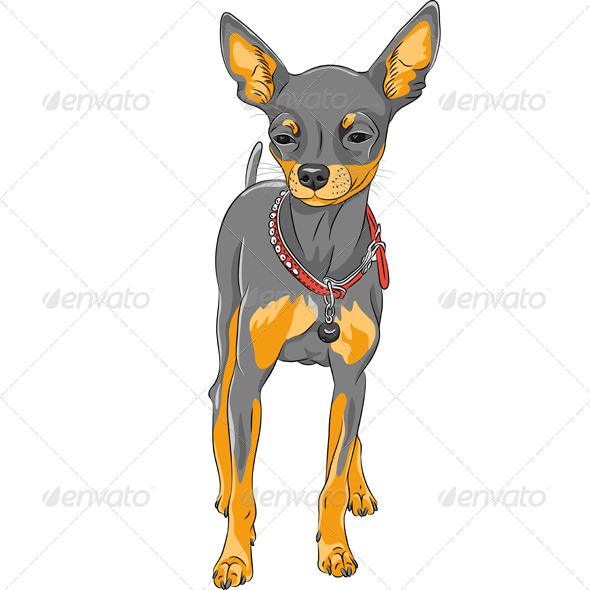 GraphicRiver Chihuahua Breed 8157334