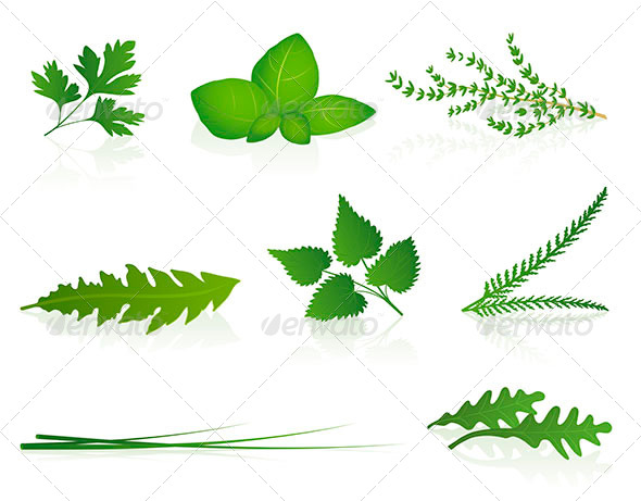 GraphicRiver Herbs 8157422