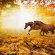 Two running horses - PhotoDune Item for Sale