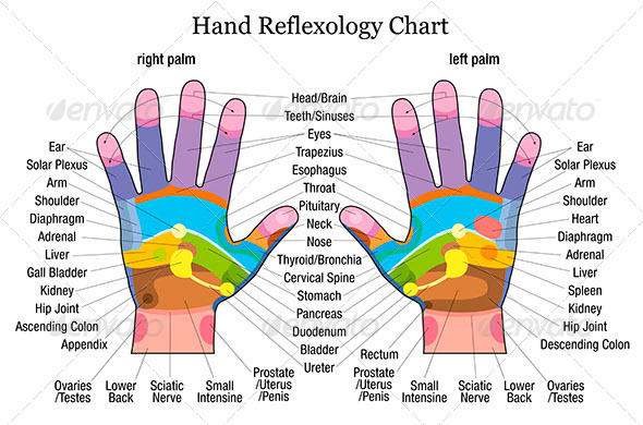 GraphicRiver Hand Reflexology Chart Description 8168001