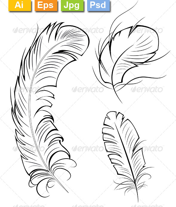 Three Contour Feathers
