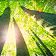 Sunny Green Trees - VideoHive Item for Sale