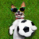 funny brazil  soccer dog - PhotoDune Item for Sale
