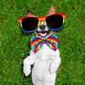 very funny gay  dog - PhotoDune Item for Sale