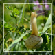 Snail Climbing - VideoHive Item for Sale