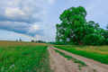 dirt road in a field - PhotoDune Item for Sale
