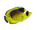 Diagonal-lined butterflyfish - PhotoDune Item for Sale