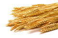 Sheaf Golden Wheat Ears - PhotoDune Item for Sale