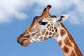 Giraffe portrait - PhotoDune Item for Sale