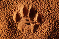 Lion paw imprint - PhotoDune Item for Sale
