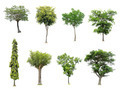 collection of tree on white background - PhotoDune Item for Sale